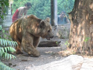 Медведь в зоопарке Будапешта, Венгрия