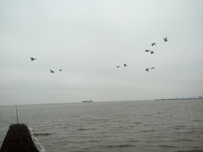 Уток здесь очень много, как и других птиц